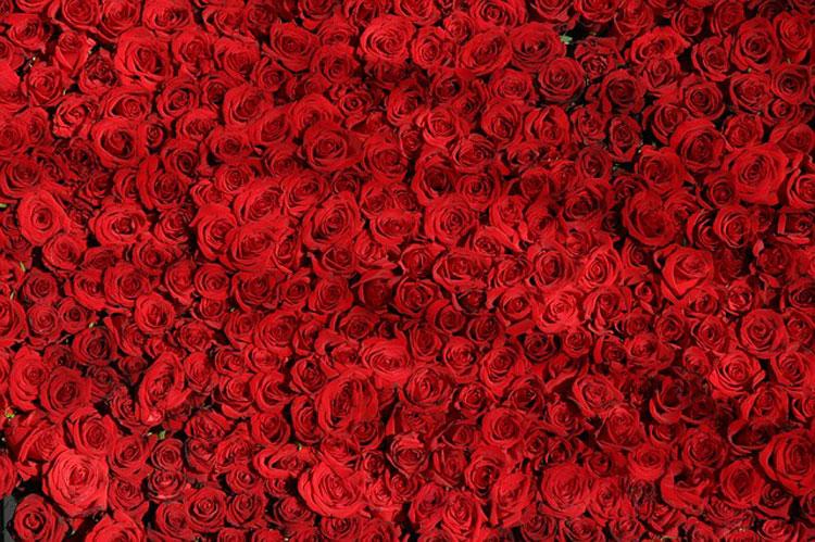 Cerimónia das Rosas